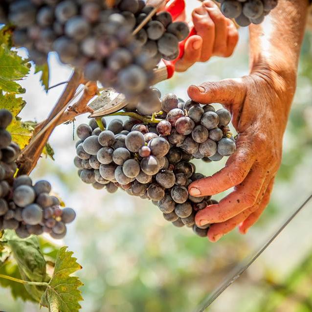 Препорачано од Slow Wine 2021