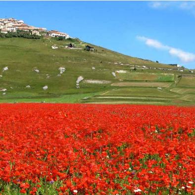 Bontà Toscane
